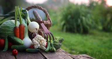 Fresh vegetables in basket next to gardening tools