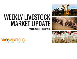 Weekly livestock market update