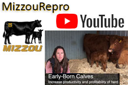 Mizzou Beef Reproduction YouTube channel