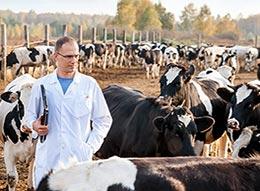 veterinarian on cattle farm