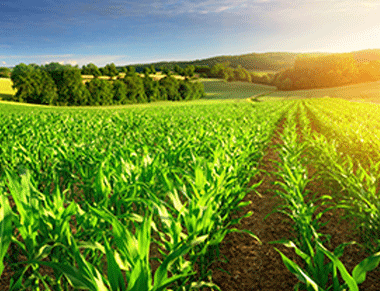 Synthetic Auxin Herbicides Applicator Training