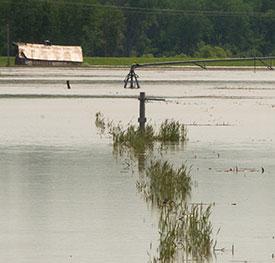 A flooded crop field