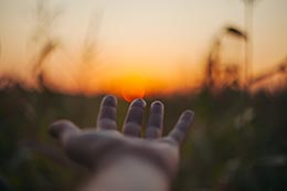 Hand reaching out toward a field of crops
