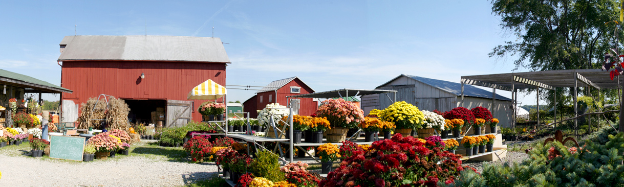 Plants displayed for sale at farm