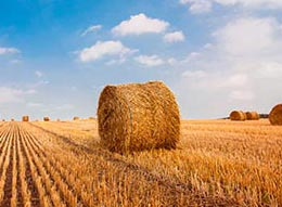 Hay bales in a sunny field