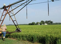 Center pivot irrigation of rice field