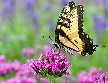 Master Pollinator Steward