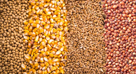 soy beans, corn,wheat and sorghum linked to variety testing program