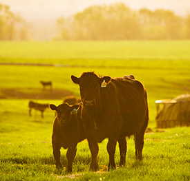 Growing Agribusiness Sustainably