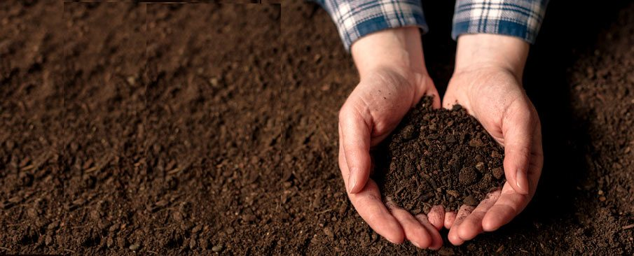 hands holding dark soil