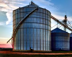 Link to Missouri grain crops website