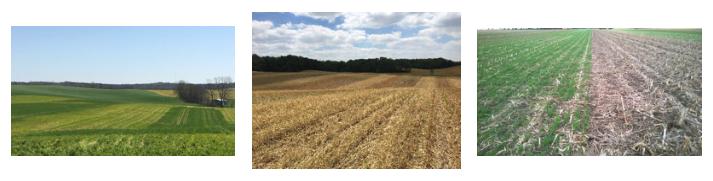 Strips in fields
