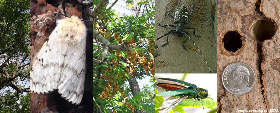 collage of tree pests and trees