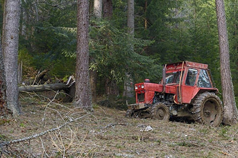 Tractor in woodland.