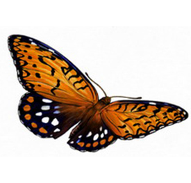 Regal Fritillary (butterfly) graphic on 2012 volunteer service pin