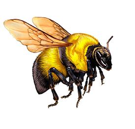 Bumblebee graphic on 2017 volunteer service pin
