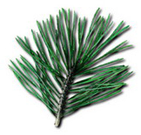 Short leaf pine graphic on 2011 volunteer service pin